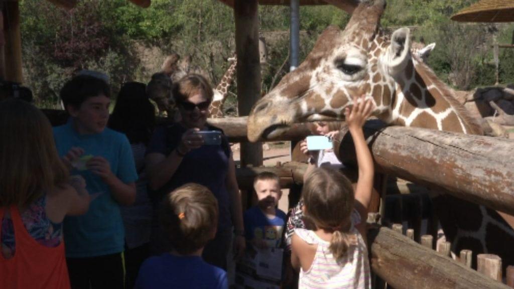 Cheyenne Mountain Zoo Giraffe