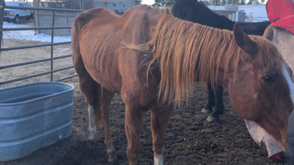 Horse seized 2