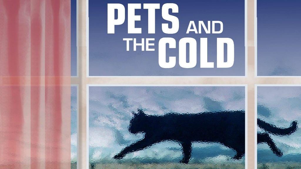 Pets outside