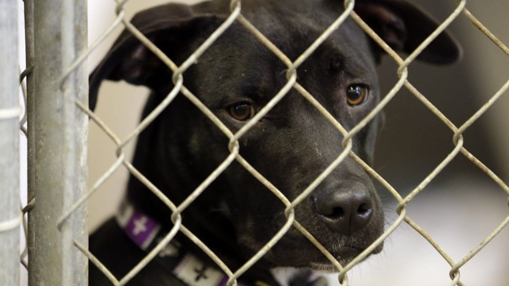 Florida lawmakers seek federal law against animal cruelty