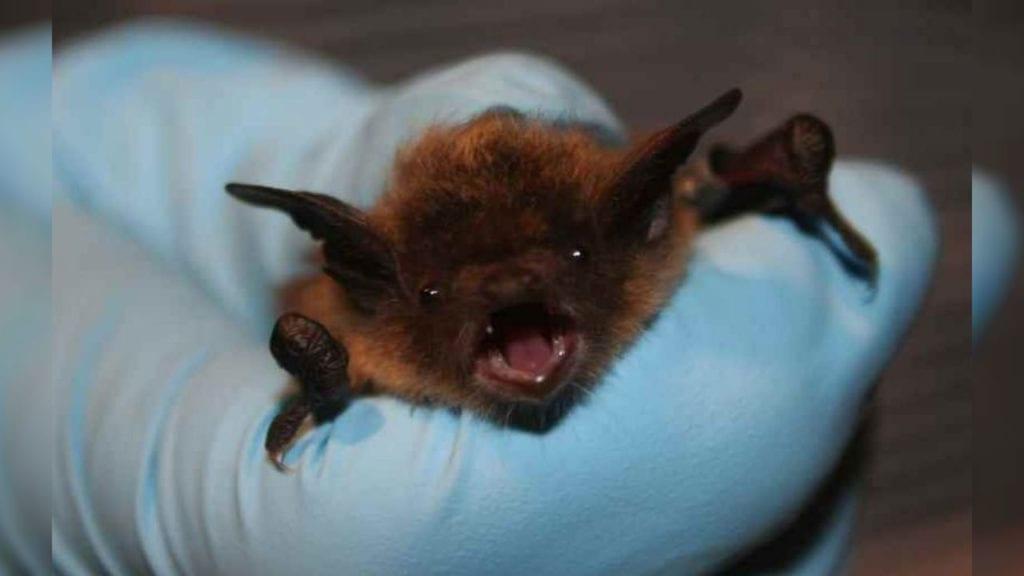 File-photo-of-bat