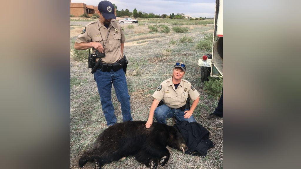 Pueblo West Bear