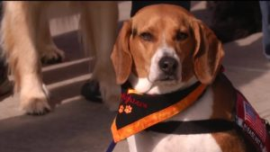 Colorado dogs being trained to comfort others in crisis